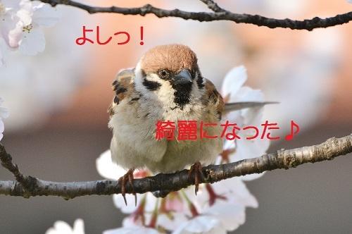 130_20170414184502f99.jpg
