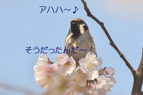 130_20170416211624671.jpg