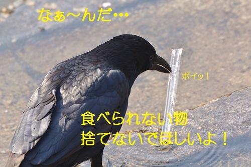 130_20170424190238d54.jpg