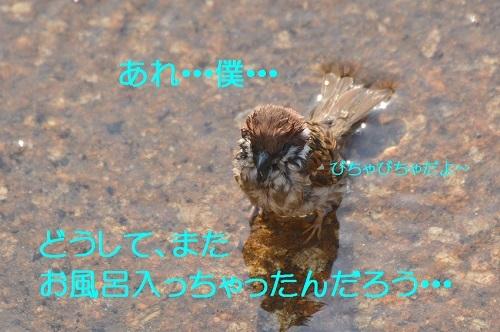 130_201704252004419a6.jpg