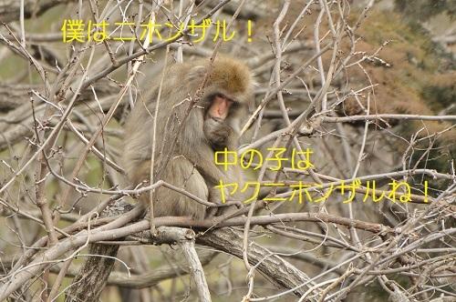 140_20170304175934511.jpg