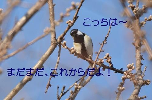 140_2017031222273923c.jpg