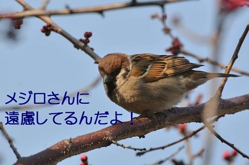 140_20170323181740b6a.jpg