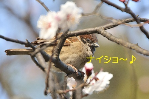140_201703241951265c4.jpg