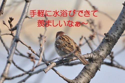 140_2017032819433186a.jpg