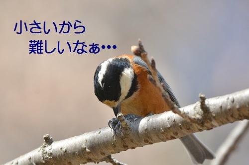 140_201704011934441f5.jpg