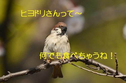 150_201703221919200d3.jpg