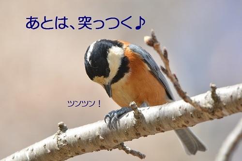 150_20170401193445e38.jpg
