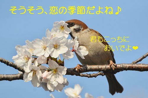 150_20170415213633194.jpg