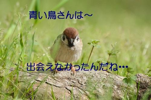 150_201705011929236c2.jpg