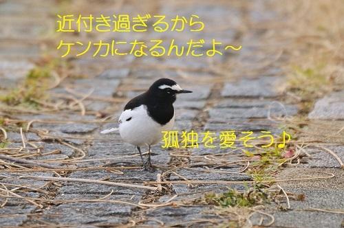 160_20170220191725df5.jpg