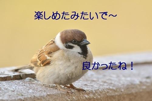 160_20170312222921cce.jpg