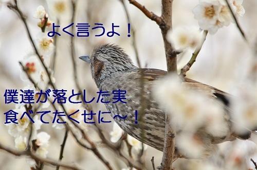 160_20170322192003f6f.jpg