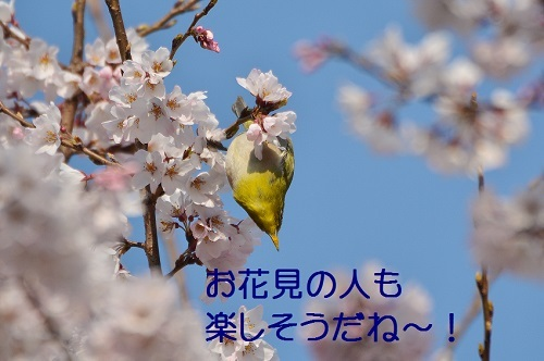 160_20170402202931f03.jpg