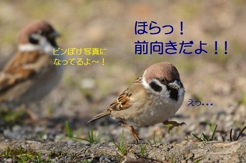 170_201703081843163e9.jpg