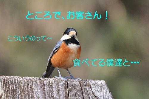 170_20170331184002785.jpg