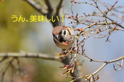 170_20170420191650431.jpg