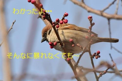 180_20170329194038ebc.jpg