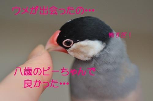 190_20170404192859498.jpg
