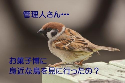 200_20170428190542e84.jpg