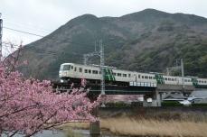 河津桜と踊り子