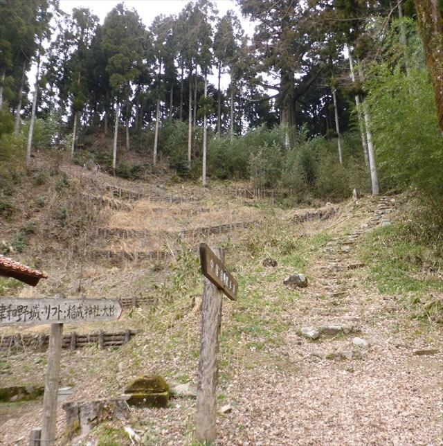 鷲原の大杉2