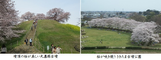 b0406-5 丸墓塚-桜