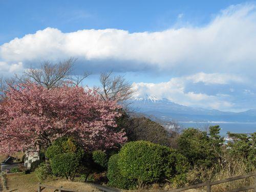日本平12