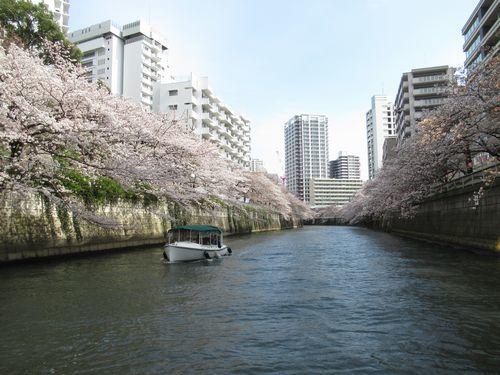目黒川20