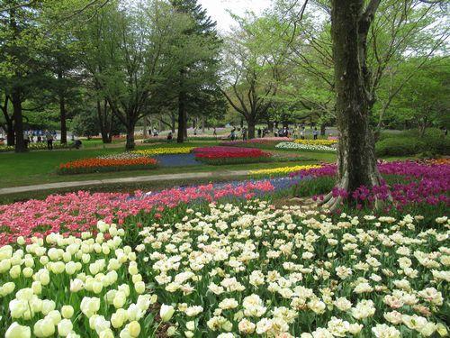 昭和記念公園13