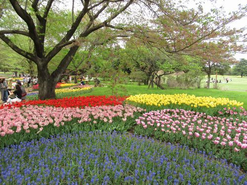昭和記念公園17