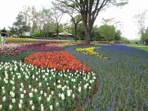 昭和記念公園26
