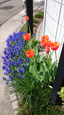 4月の花壇