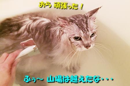 男のムダ毛処理大作戦5
