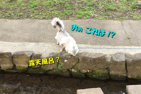 哀愁のお散歩3