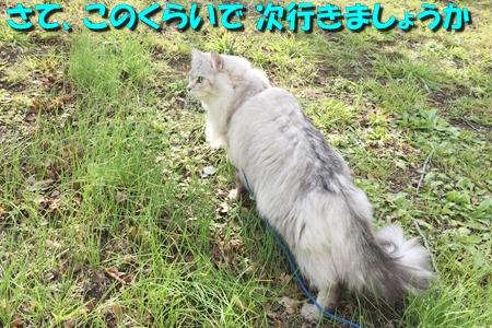 哀愁のお散歩15
