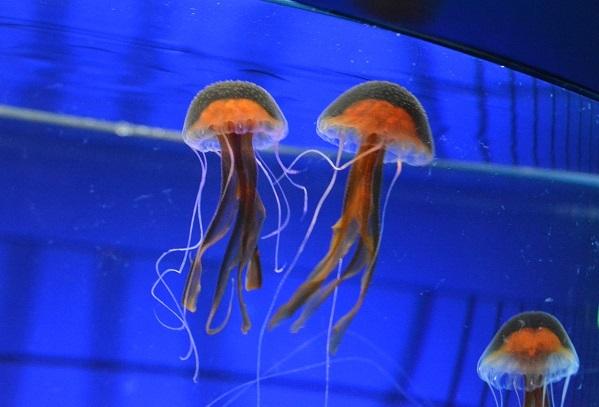 無脊椎水族館