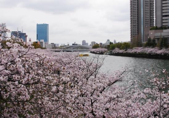 sakuranomiya.jpg