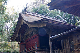 170222手力雄神社のスギ