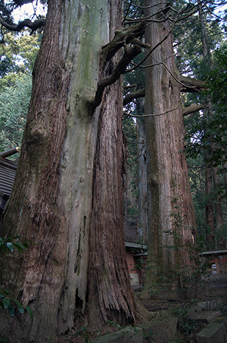 170329たわら杉 赤城神社⑩