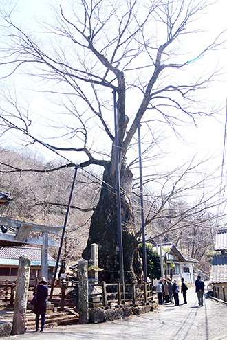 170404根古屋神社の欅⑨