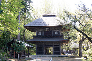170419広徳寺のイチョウ⑥