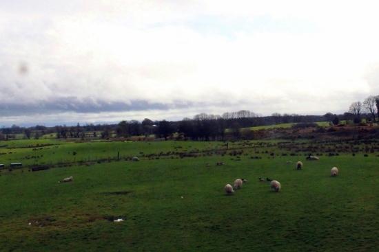 ⑬羊 (550x367)