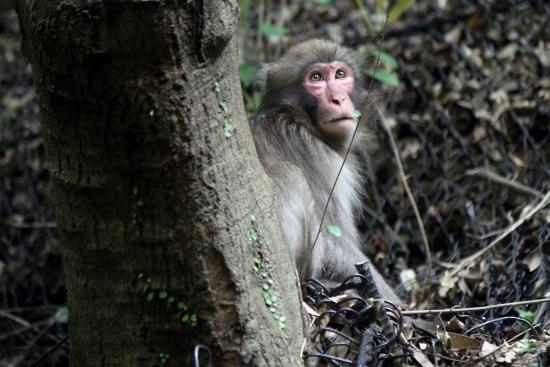 ⑪猿 (550x367)