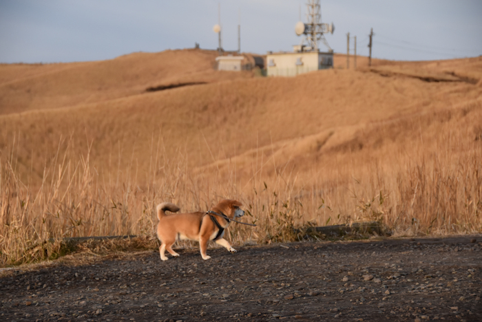 大観峰の電波塔