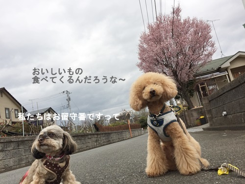 IMG_5758-1.jpg