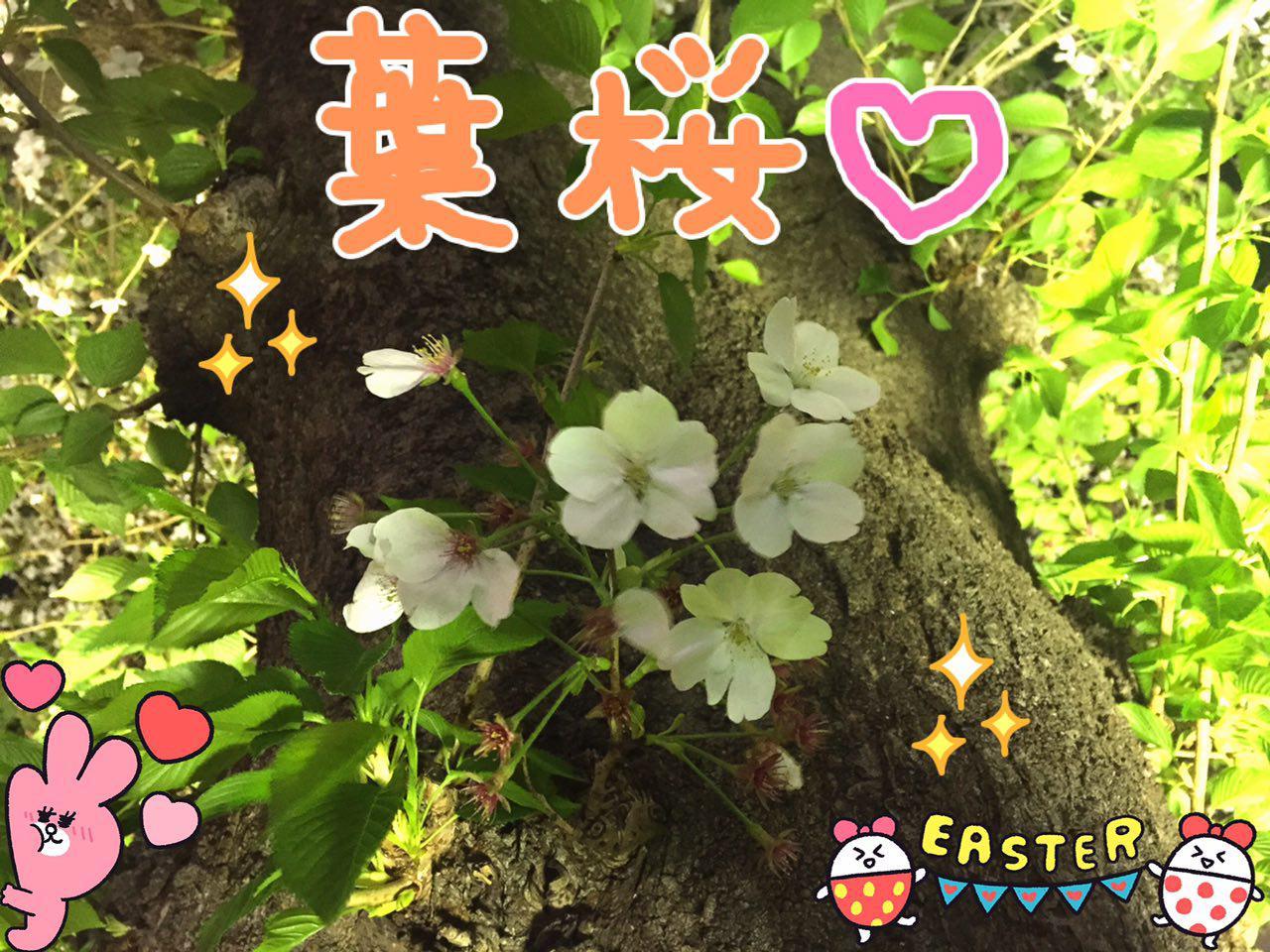 photo_2017-04-14_23-09-50.jpg