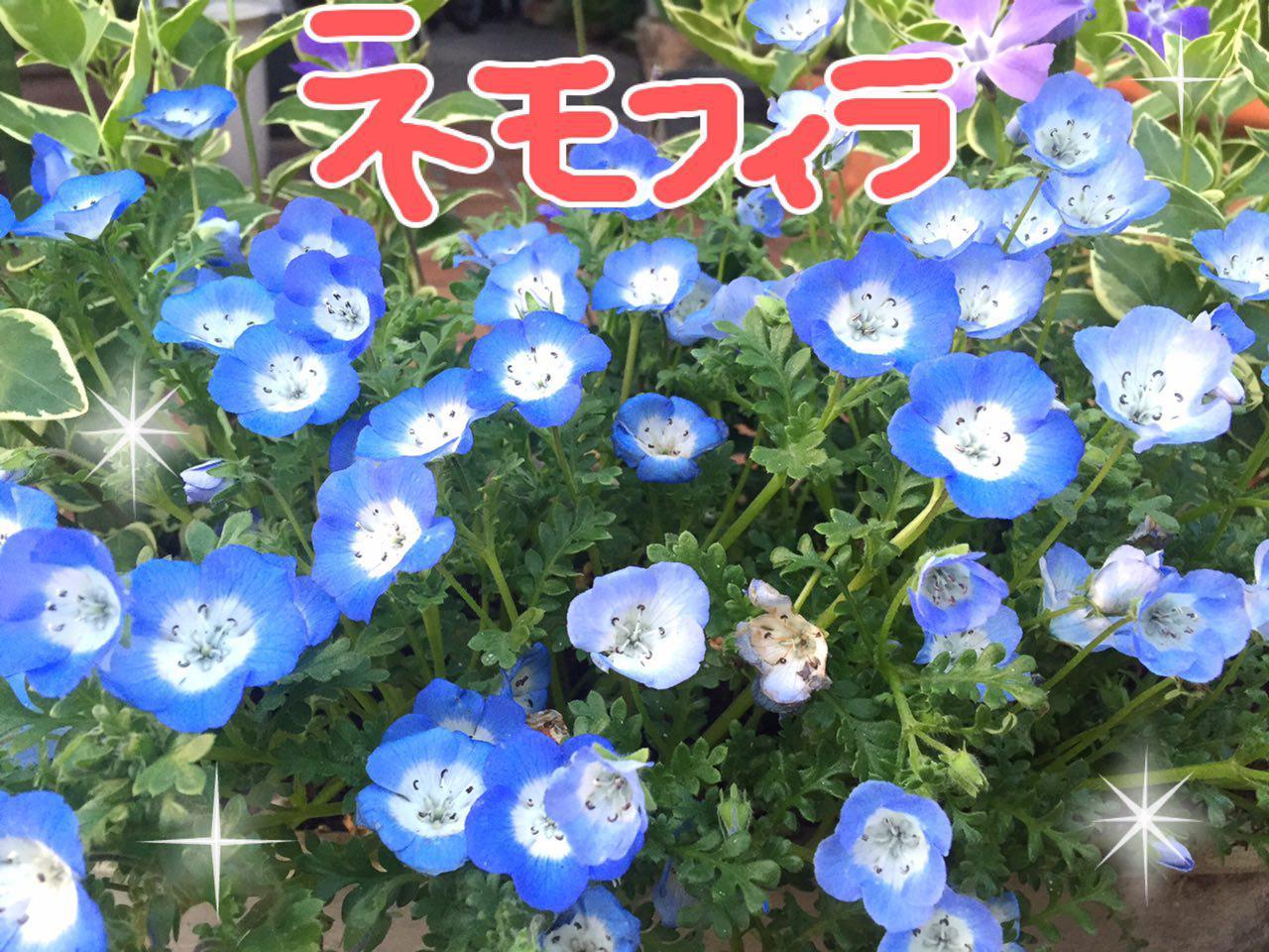 photo_2017-04-15_22-59-23.jpg