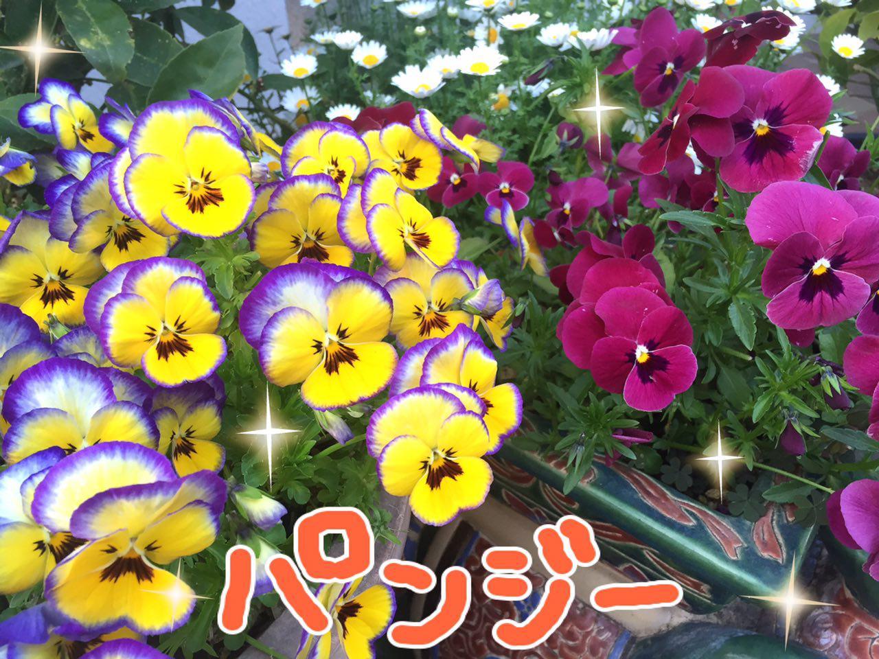 photo_2017-04-15_22-59-29.jpg