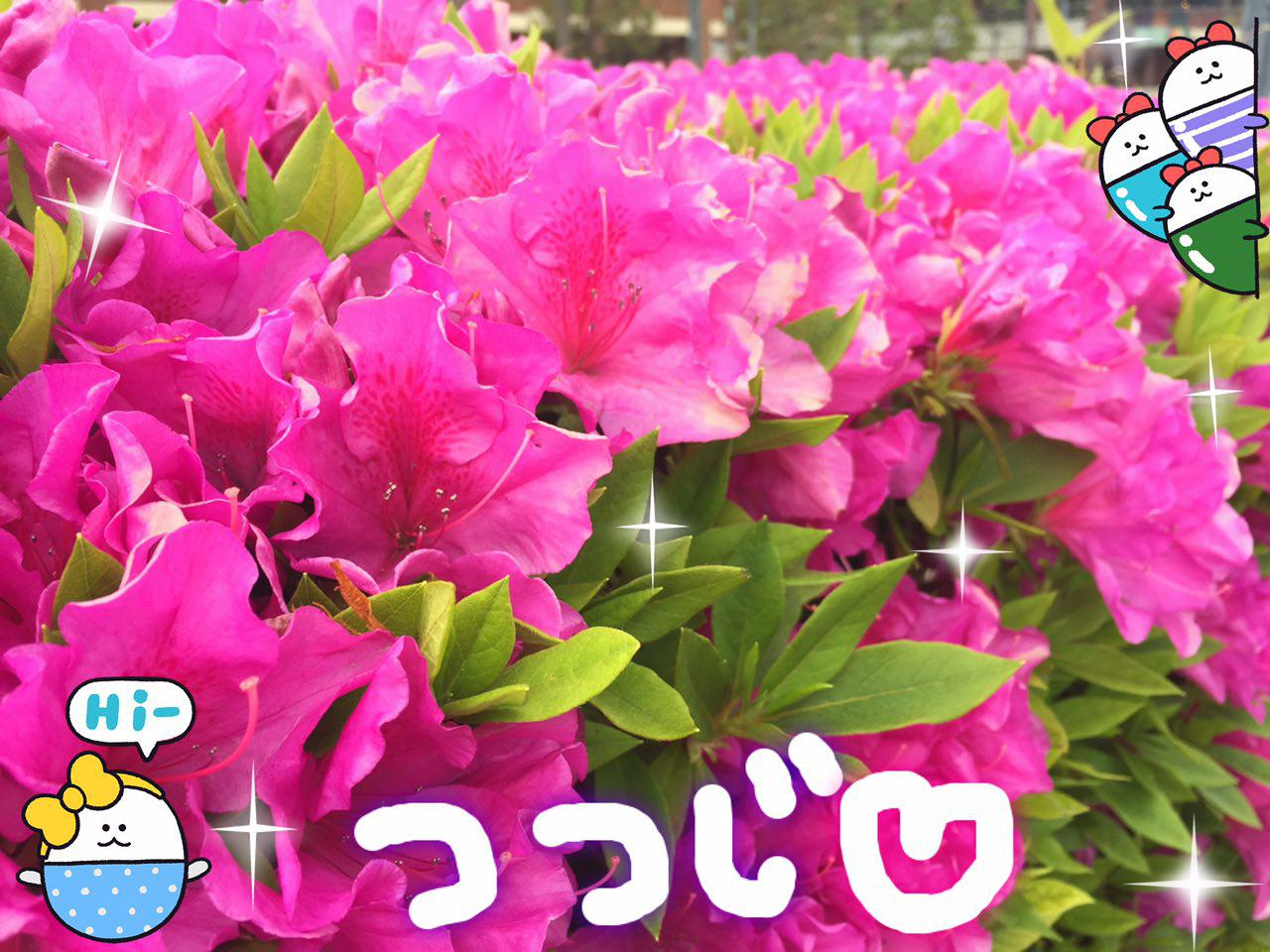 photo_2017-04-26_23-49-32.jpg